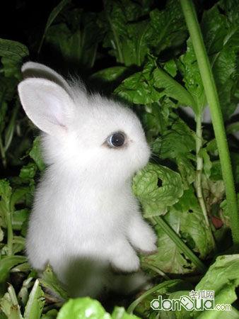 """饿狼嘴离里的小白兔-小兔子捧着饭碗,对大兔子说:""""想你."""" """"我不就在你身边吗?""""大"""