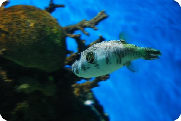 壁纸 动物 海底 海底世界 海洋馆 水族馆 鱼 鱼类 600_400