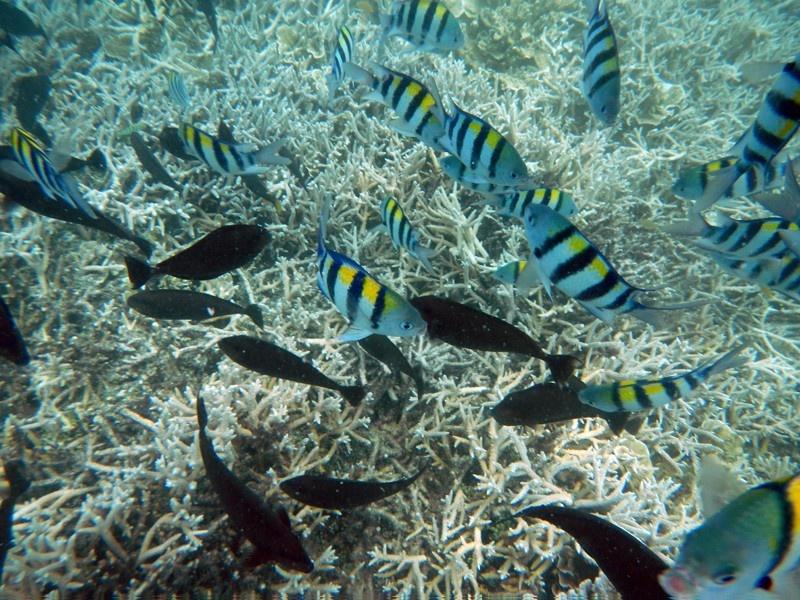 帕劳陆地面积只有493平方公里,与塞班岛,关岛同属一个岛链,与日本和