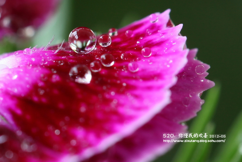 你懂我的欢喜-紫旭棠:流年之爱-我的