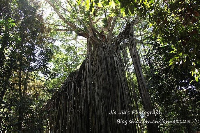 凡达》的生命之树; 60方缸阿凡达生命之树造景; 去热带雨寻找《阿凡达