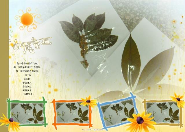 树叶画及植物标本(图)