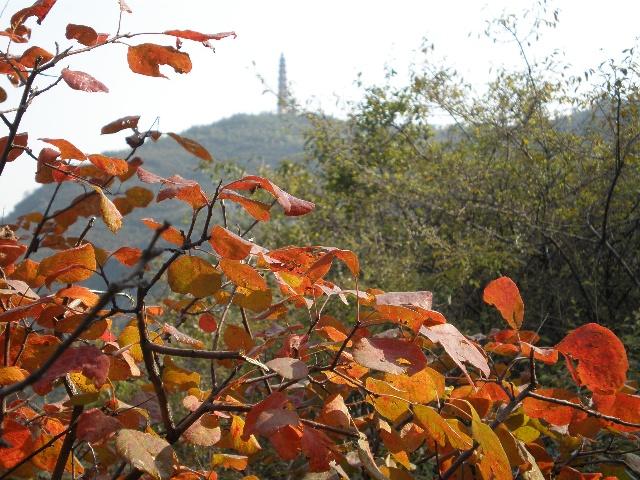 """杨树     我爱耐寒的松树,也爱金黄的银杏树,但我更爱高大挺拔的杨树。     春天一到,杨树的树枝上就""""蹦""""出许多小嫩芽,远远望去就像许多嫩绿的小星星,走近看那是些黄中带绿,长着毛毛的小绿球。慢慢地,这些小绿球变成了心行的小叶子,只有拇指般大,嫩绿嫩绿的,生机勃勃。     夏天到了,小叶子长成了大叶子,大得有手掌般大,绿绿的,绿得那么新鲜,都快要滴油了。叶子一片叠一片,一层压一层,密不透光,老人们在树下纳凉,孩子们则围在树底下捉迷藏。所有树枝挺拔向上,给人一种奋发向上的感觉"""