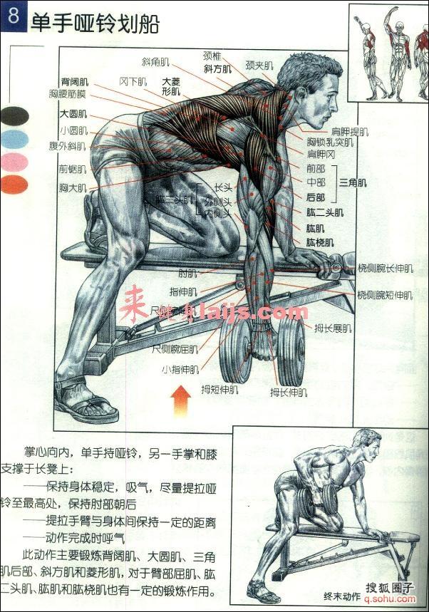 肩部结构解剖图