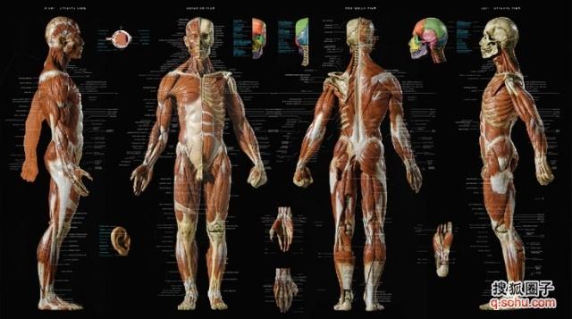 身-体能训练-(人体骨骼