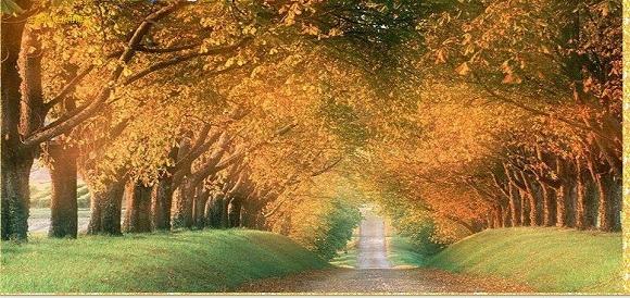 秋天风景简笔画彩铅
