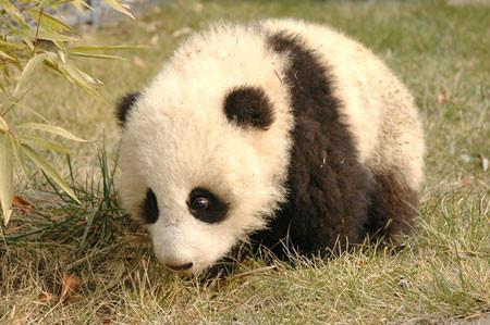 超萌小熊猫-发威的博客-我的搜狐