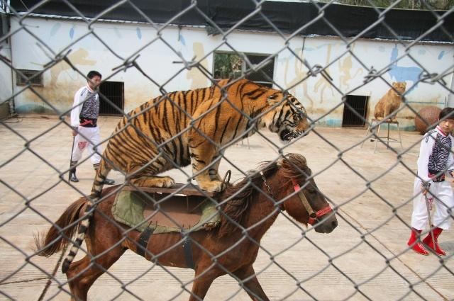 京明度假村,京明塔,动物园,马戏表演