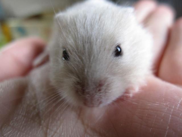两只小仓鼠的故事 (二)