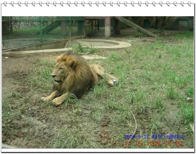 红山动物园与国宝三熊猫初次见