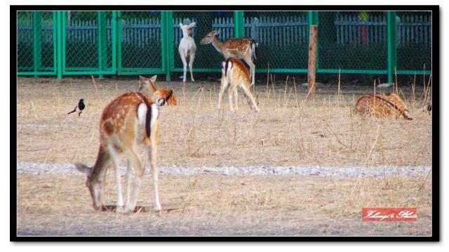 麋鹿苑 世界灭绝动物墓地