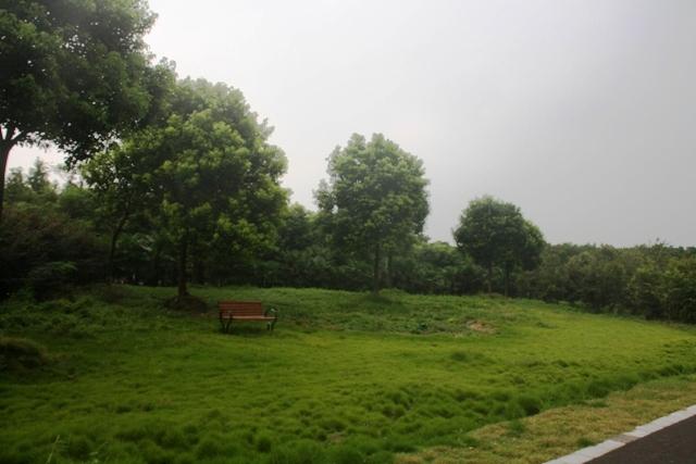 沪,苏,皖,鄂自驾游:崇明岛,一个被绿色环抱的小岛