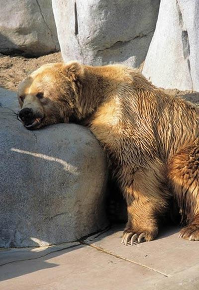 [转载]动物们五花八门的睡觉姿势(图)