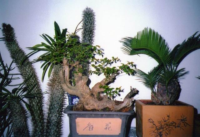 我制作的树桩盆景和盆栽观赏植物