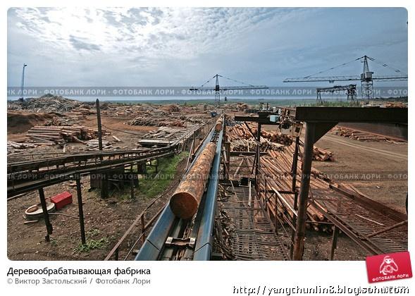 俄罗斯大型木材加工厂(原木机械扒皮流水线)