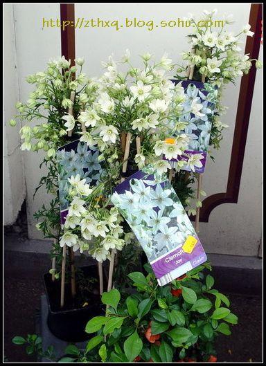 【法国】小镇的花和花店(续)