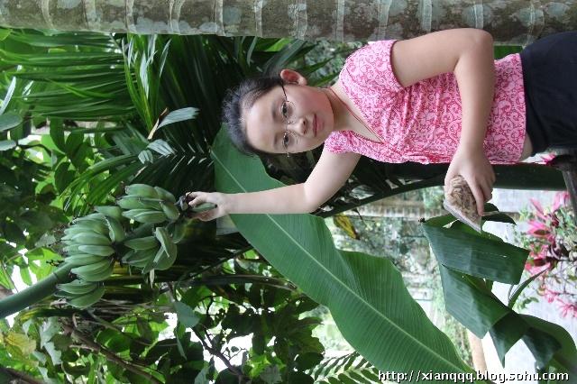海南岛的植物