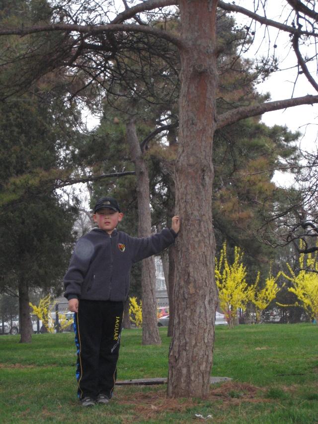 """寻找""""小平树""""!--游天坛公园(2010.04.22)"""