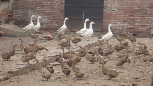 新基地旁百余只动物现状