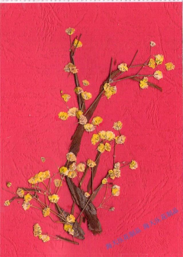 压花书签 创意组合 装饰画 有框画 墙上园艺 趣味收藏 创意礼品