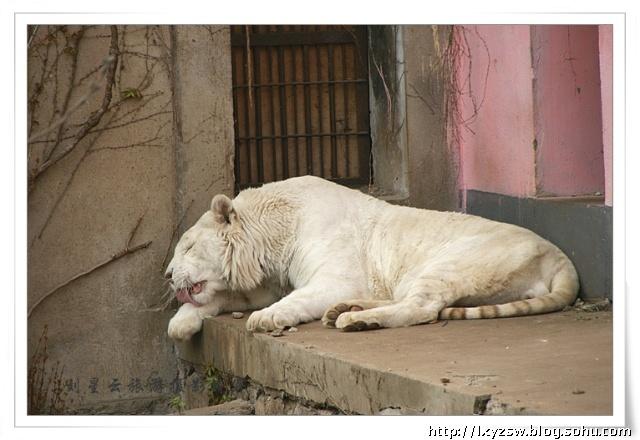 趣拍江苏徐州动物园可爱的动物们