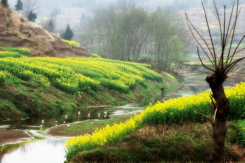 壁纸 成片种植 风景 植物 种植基地 桌面 500_333