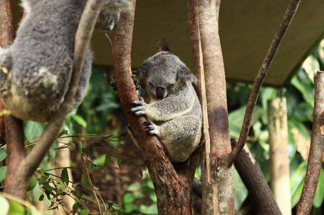 是澳大利亚最早的爬行动物公园