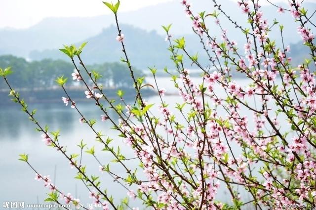 纷飞的桃花花瓣简笔画内容图片展示