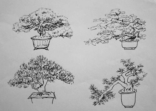 室内手绘盆栽线描稿