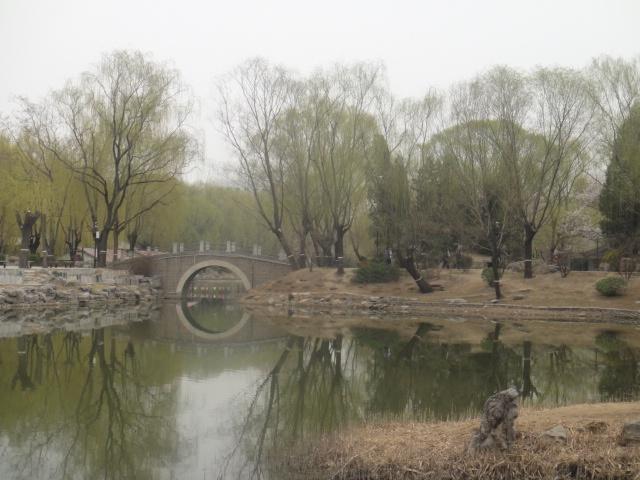 春天鸭子风景画